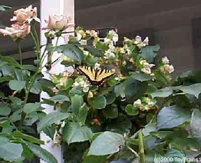1999 planter with butterfly